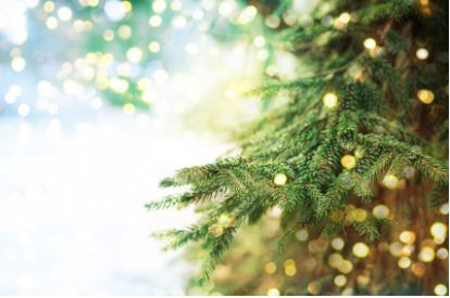 evergreen Christmas tree branch for wreath