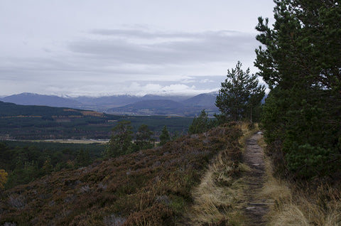 Hiking in the Cairngorms National Park Scotland
