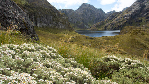 Hiking Tramping the Routeburn Track New Zealand, photo by Larry Gross
