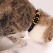 Load image into Gallery viewer, Cat Collar