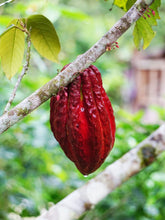 Load image into Gallery viewer, The Complete Guide To Ceremonial Cacao