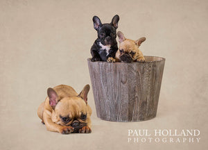 Studio Photo Shoot - Pet