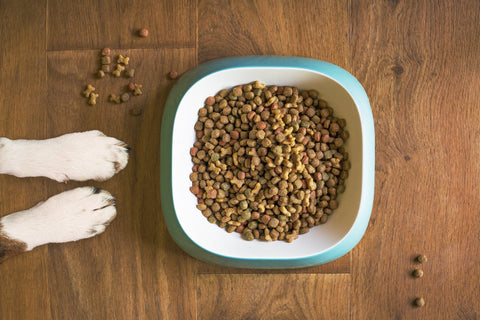 Dog bowl with kibble next to paws.