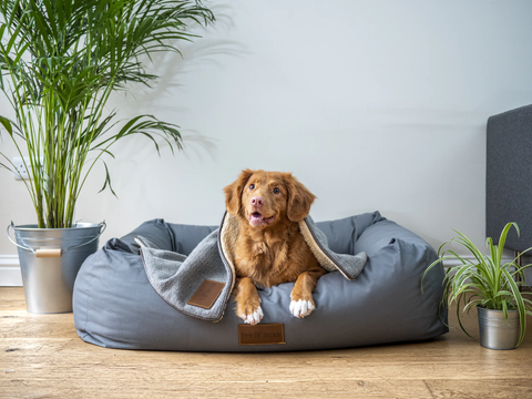 Dog laying on dog mattress near two plants as it adoringly looks across room