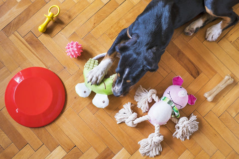 Dog playing with toys on a wood floor.