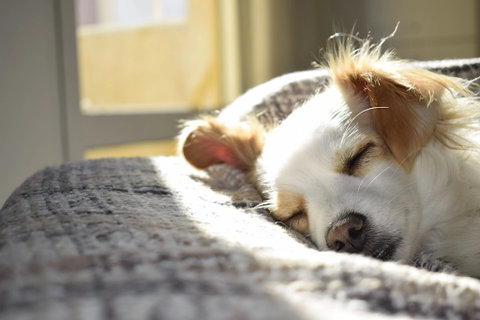 An adorable dog sleeping on a blanket with its eyes closed.