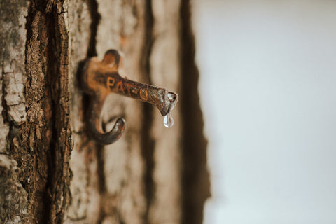 Finding Home Farms Organic Maple Syrup Tap