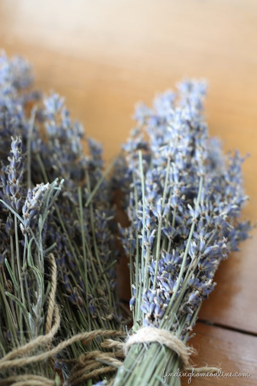 Drying Lavender in Bunches