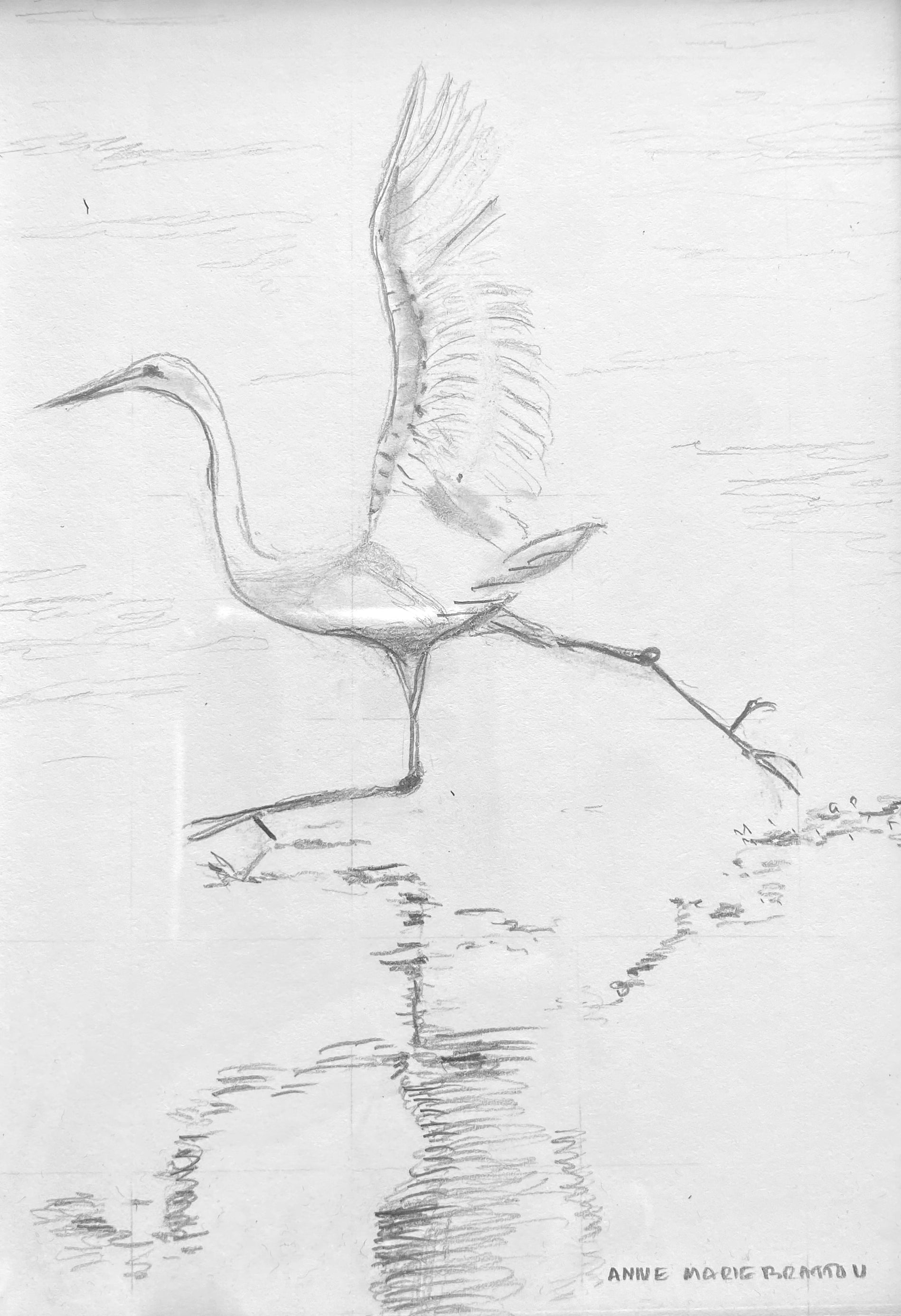 Egret and Reflection Running