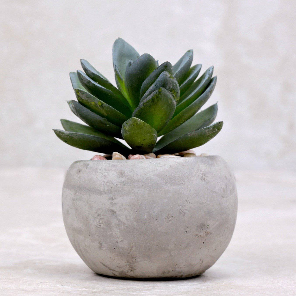 Mini Succulent | Agave - Kalalou - Coco and Duckie