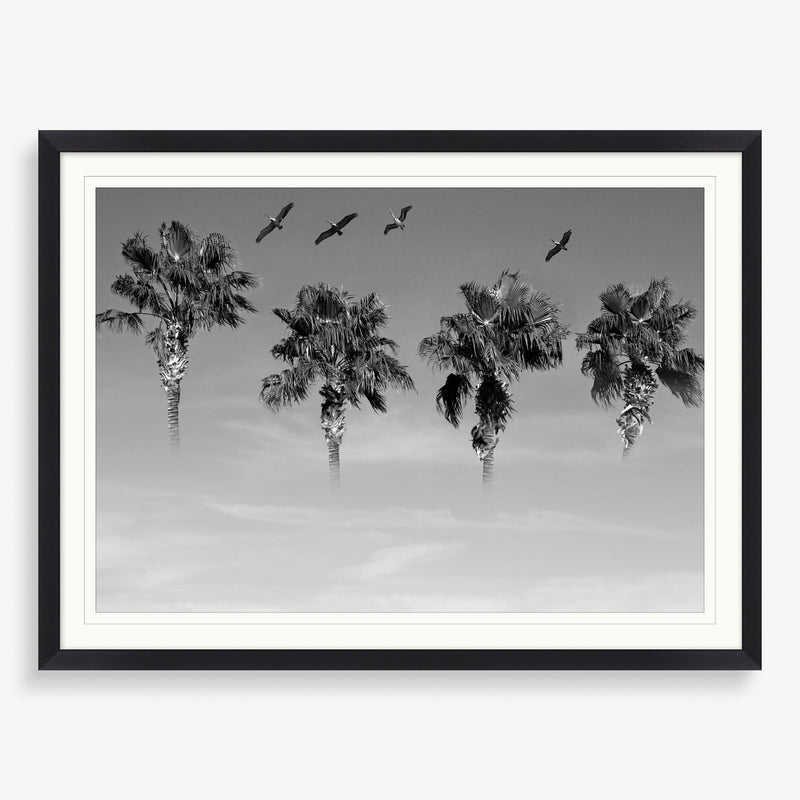 Flock of Palms