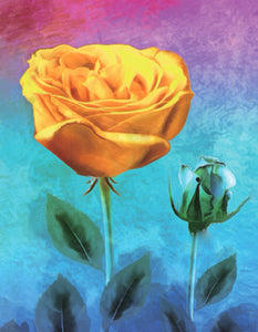 Yellow Rose, 40x50 cm, Rund