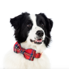 Load image into Gallery viewer, Dog Collar - Triple Colored Plaid