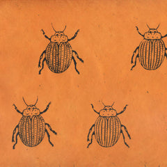 Black Scarab on Orange