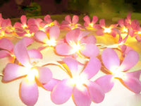 Pink Frangipani LED fairy lights - 35 bulbs with 8 flash settings