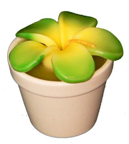 Frangipani Candle in Porcelain Plant Pot - Green