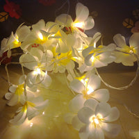 White Frangipani Flower - 20 LED bulb fairy lights