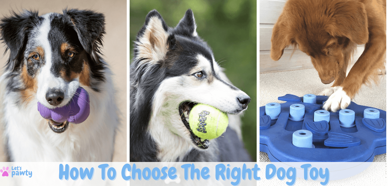 How to choose the right dog toy