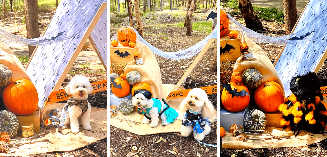 Halloween theme for dog pawties of let's pawty sydney