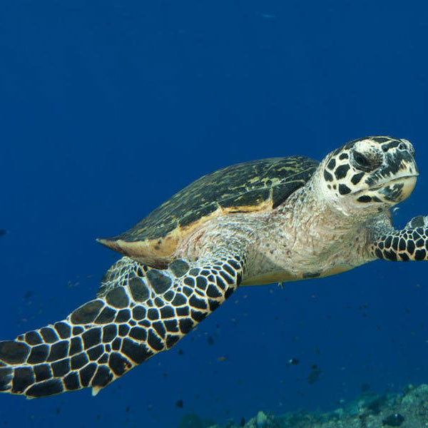 Save The Critters Hawksbill Turtle - Green