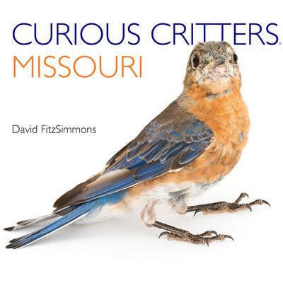 Curious Critters Missouri - Lil Tulips