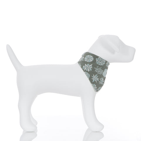 Dog Bandana Succulent Plants
