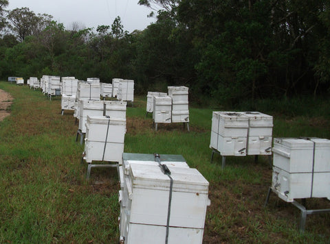 Bee hives where we gather our beeswax