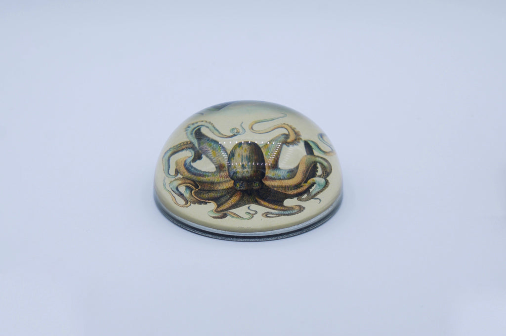 Octopus - Dome Paperweight