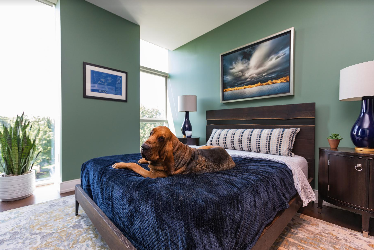 Bedroom designed by Henck Design featuring Fedex the dog