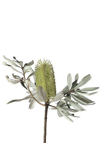 Banksia Flowers (LARGE)