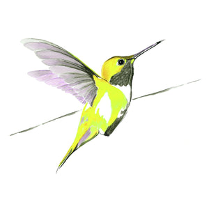 Humming bird in yellow limited edition print by Anna Jacobs