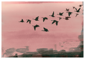 Urban Flight in Rose<Br>Print