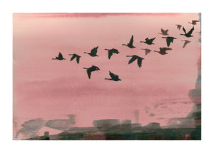 Urban Flight in Rose print by Anna Jacobs - dark silhouetted birds flying across a rose pink background and abstract urban lansdcabe