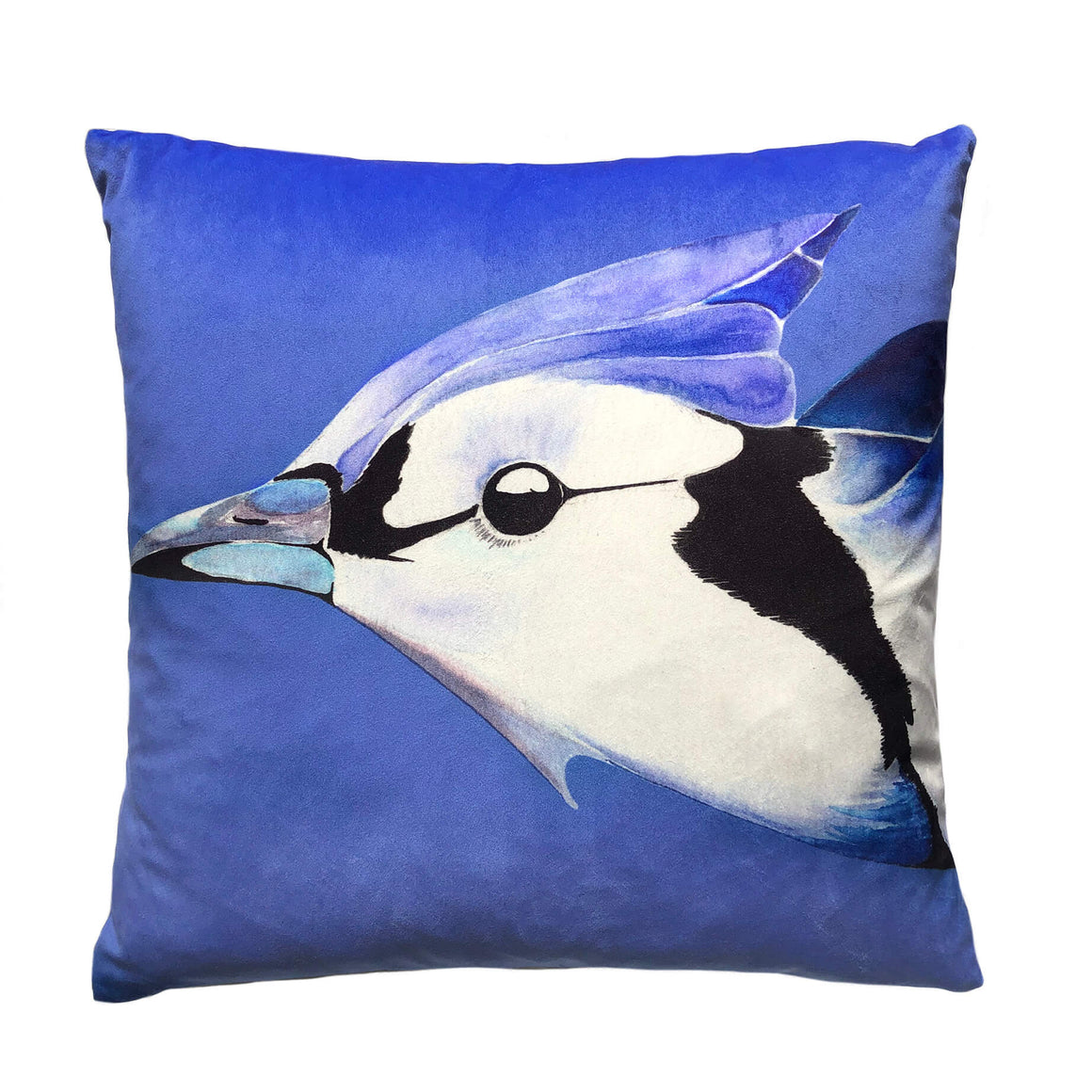 Blue Jay on Cornflower velvet cushion