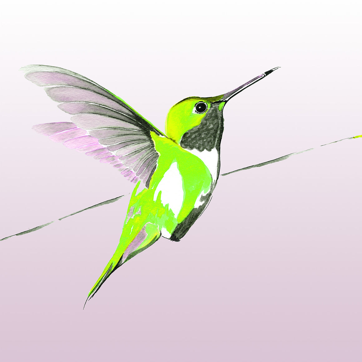 Green Hummer on Lilac limited edition print by Anna Jacobs