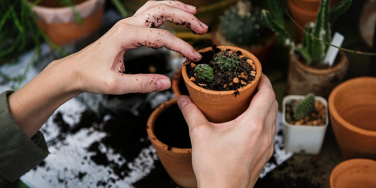 Lady planting a seed in a plant pot