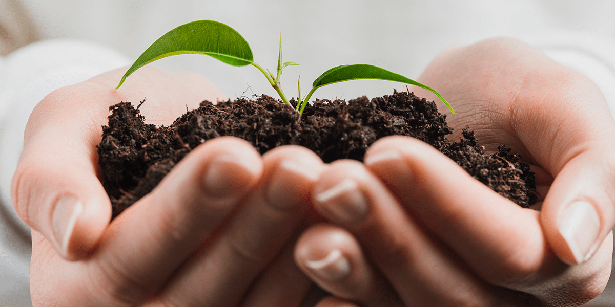 Hands holding organic plant and soil