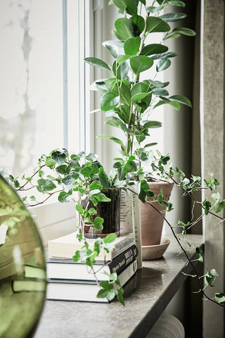 house plants, sustainable interior, greenery, green design