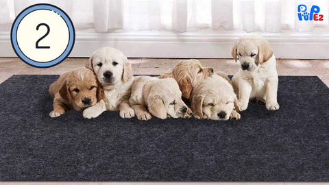 whelping mats for dogs