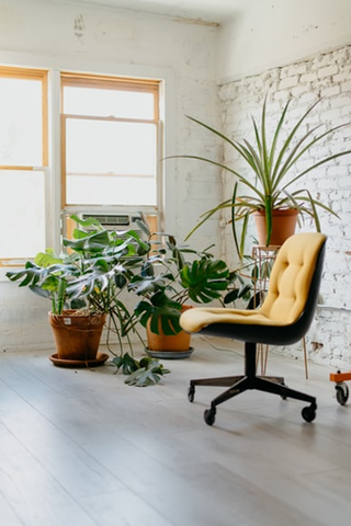 office chair and planters by the window.