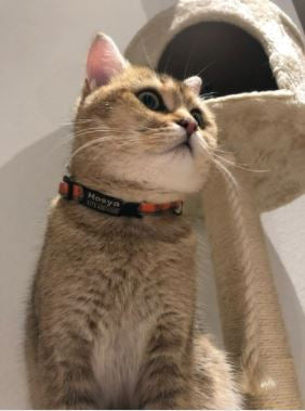 collier personnalisable anti fugue chat