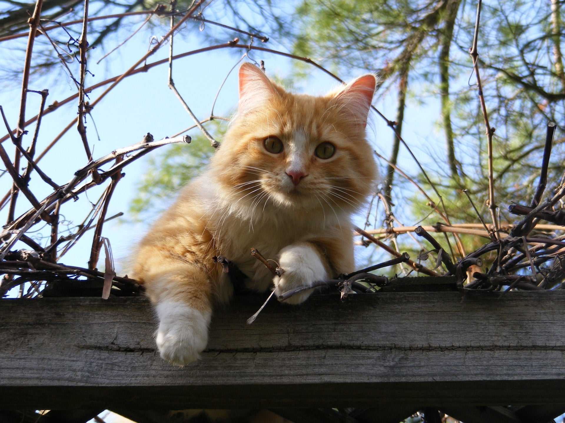chat chasse fugue