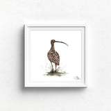 CURLEW WATERCOLOUR BY MEG HAWKINS