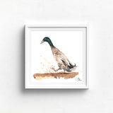 INDIAN RUNNER DUCK Watercolour