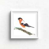 BULL FINCH Watercolour