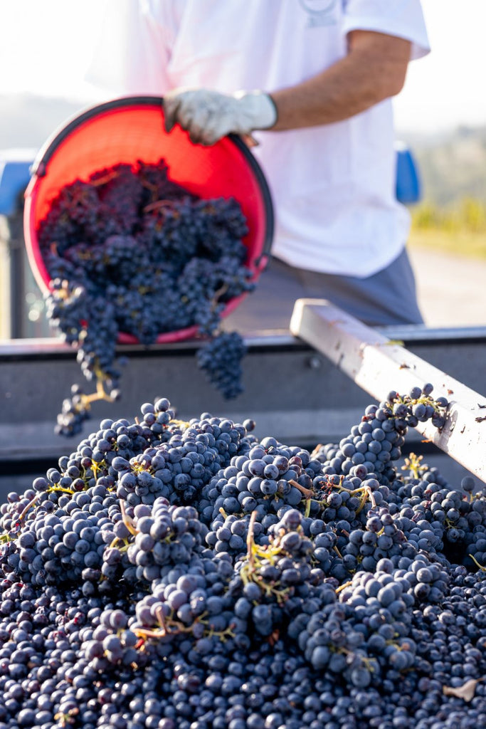 Grapes from Harvest