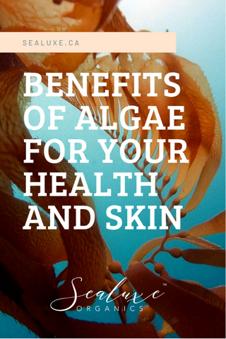 benefits of algae for your health and skin