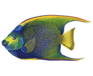 Tropical Fish Wall Decals Collection