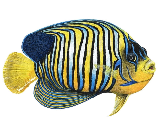 Sea Creatures and Tropical Fish Wall Decals Collection (Economy Size 48 in. x 48 in.)