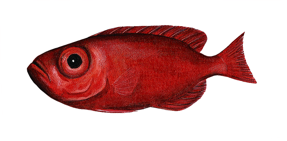 Bigeye Fish Wall decal